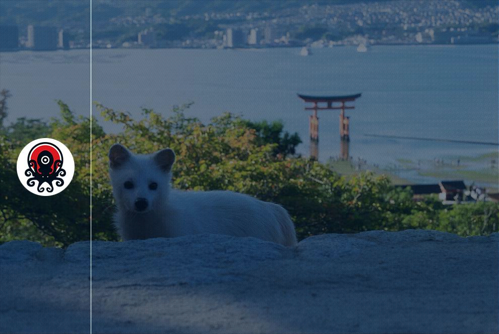 tanuki-blanc-miyajima-cover